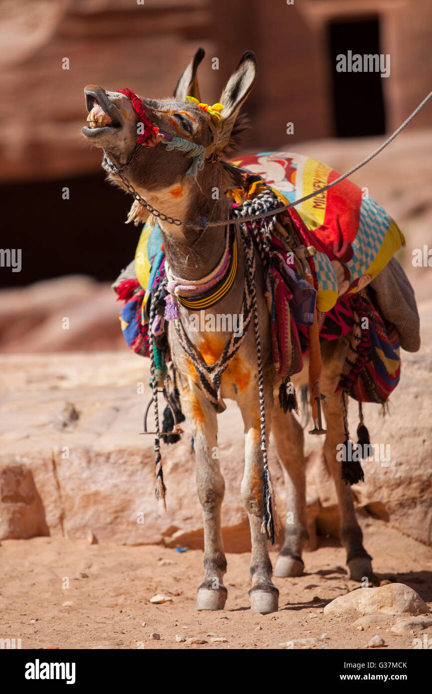 A decorated Bedouin donkey inside the ancient city of Petra, Jordan. - Stock Image