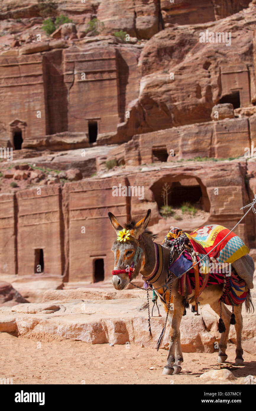 A donkey with many tombs in the background inside the ancient city of Petra, Jordan. - Stock Image