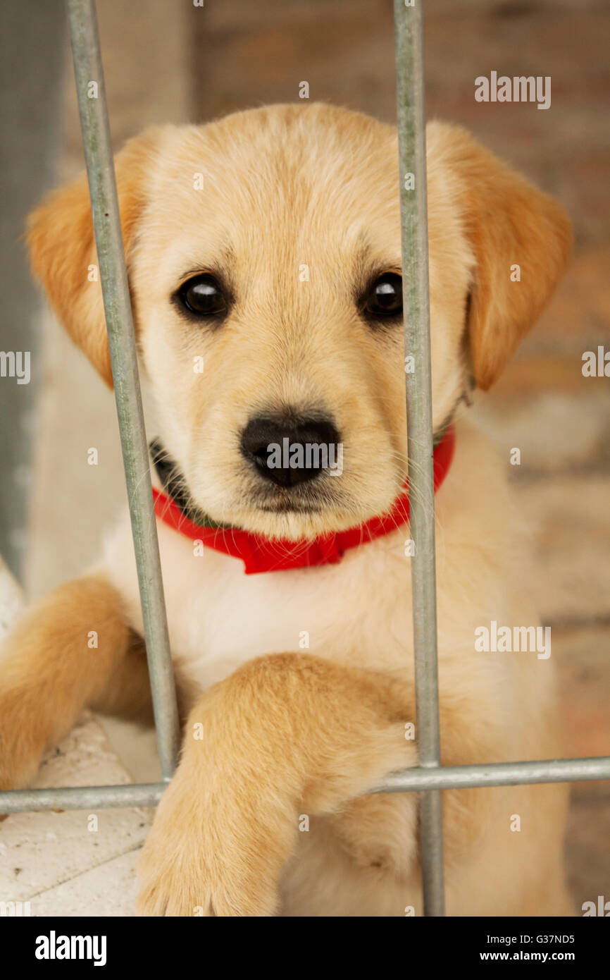 Sweet baby dog puppy in the cage looking at you.Animal adoption,protection,pet, and animal's emotion image. - Stock Image