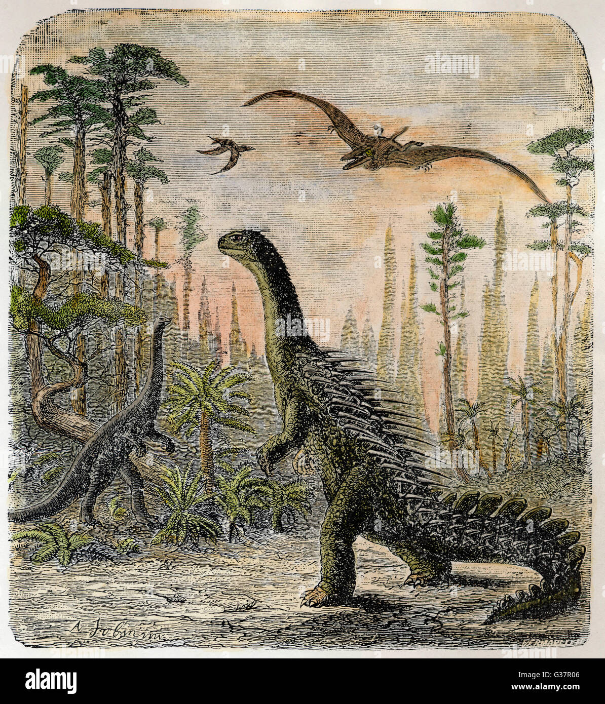 Dinosaurs of the Jurassic  period : a Stegosaurus, with a  Compsognathus in the  background - Stock Image