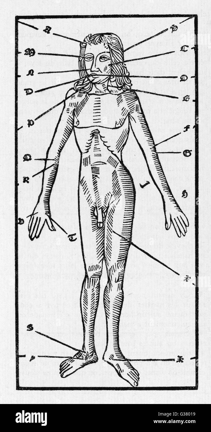 Phlebotomy Chart Of The Human Body Showing Which Veins Should Be
