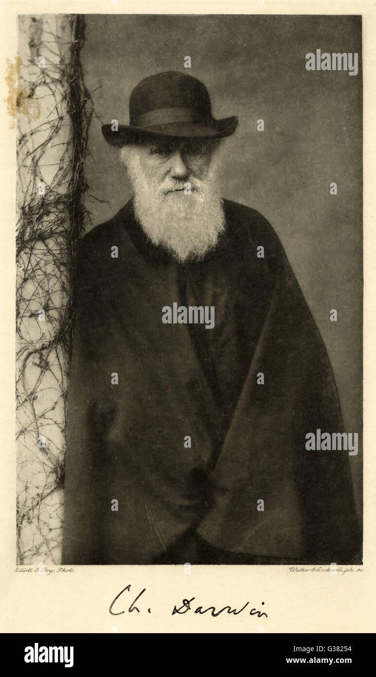 Darwin dating på nätet