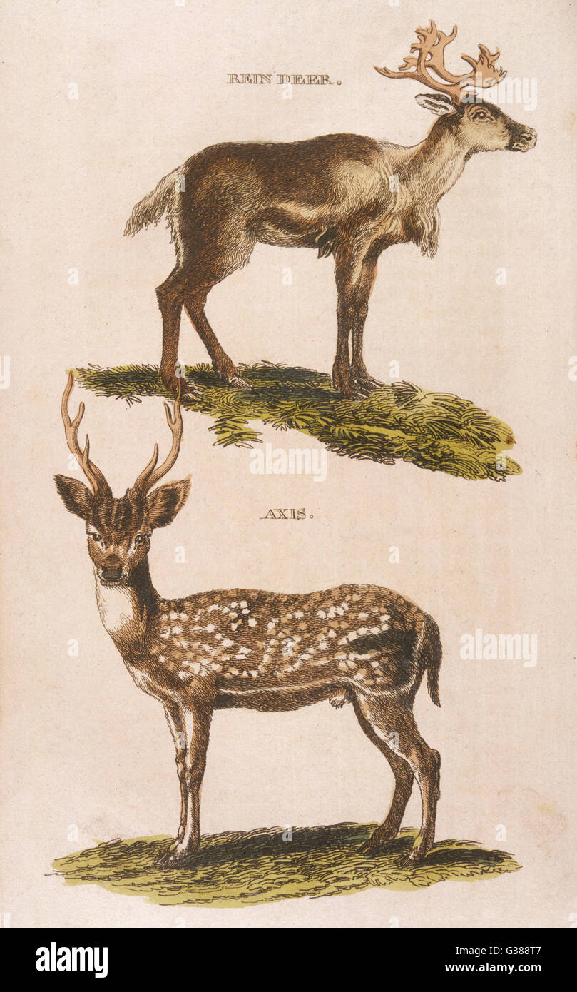 reindeer top axis deer bottom G388T7