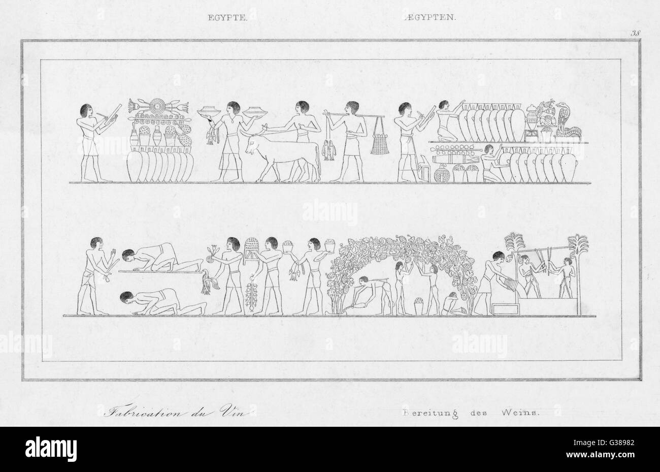 Ancient Egyptian wine  cultivation - Stock Image