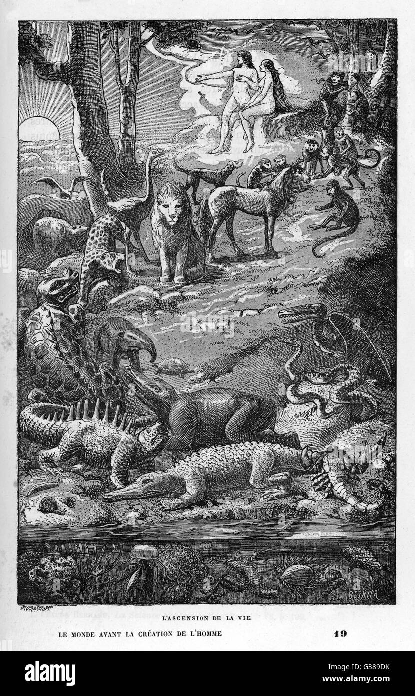 THE ASCENSION OF LIFE from primitive sea-creatures  via dinosaurs and apes to  creation's crowning glory - you - Stock Image