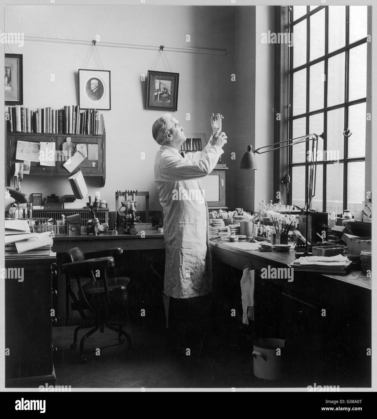 SIR ALEXANDER FLEMING -  Scottish bacteriologist at  work in his laboratory.       Date: 1881 - 1955 - Stock Image