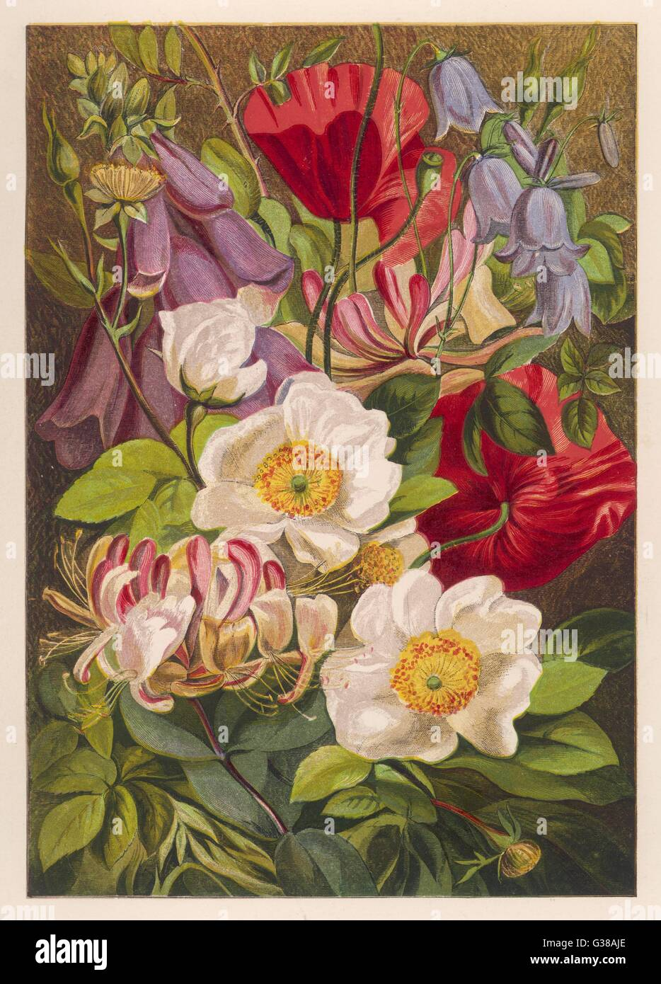 Flowers of July and August          Date: 1863 - Stock Image