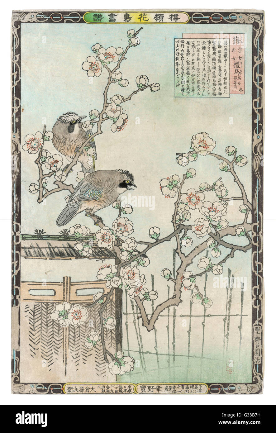 Springtime in Japan - cherry  blossom and a pair of birds        Date: 19th century - Stock Image