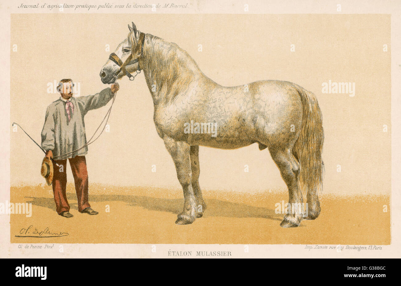 This 7-year old stallion,  understandably, won first  prize at the agricultural  show at Niort      Date: 1865 - Stock Image