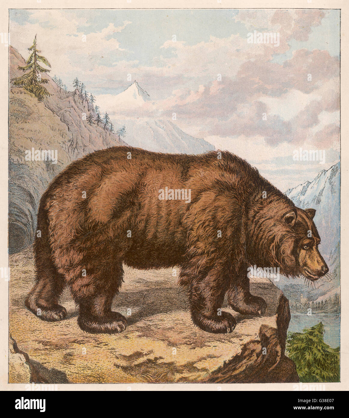 BROWN BEAR Shown on a North American  cliff top - Stock Image
