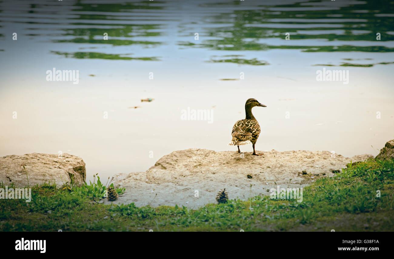 Kitchener Ontario Stock Photos & Kitchener Ontario Stock Images - Alamy