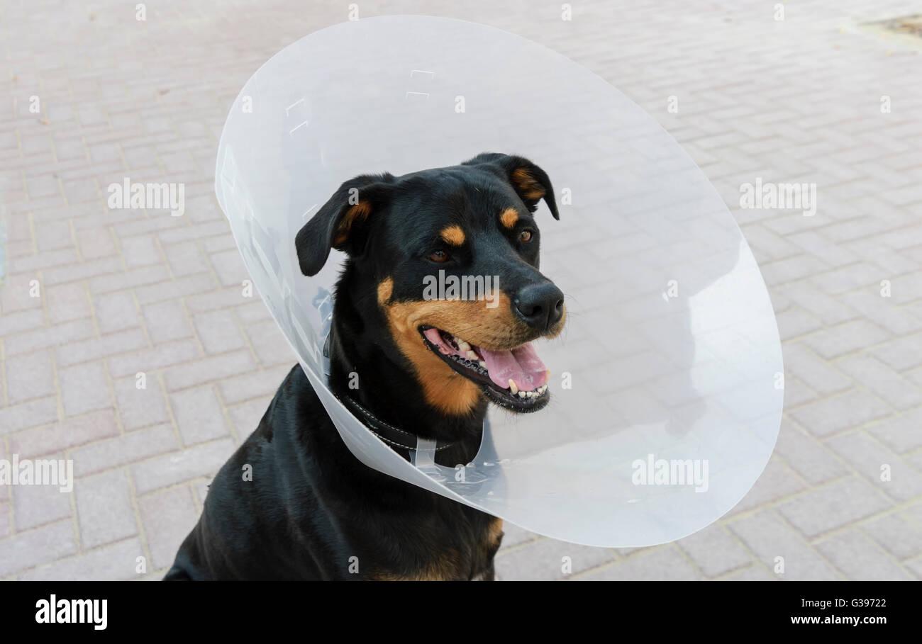 Collar To Stop Dog Biting Stitches