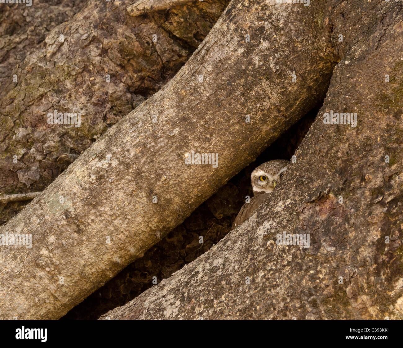 Playing hide n seek - Stock Image