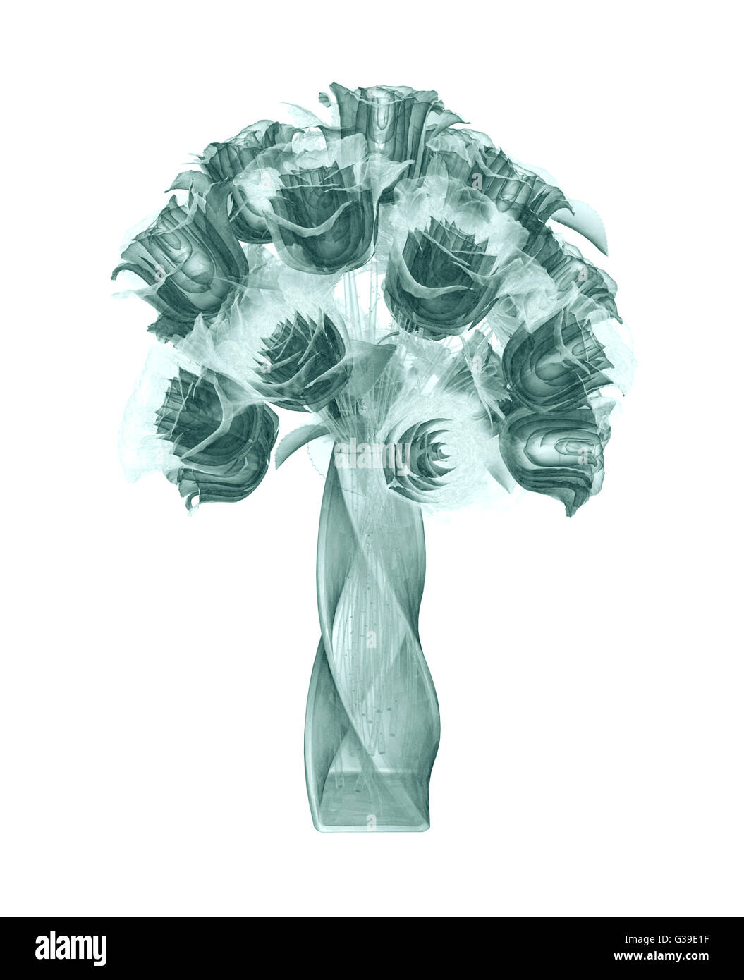 x-ray image of a flower  isolated on white , the rose 3d illustration - Stock Image