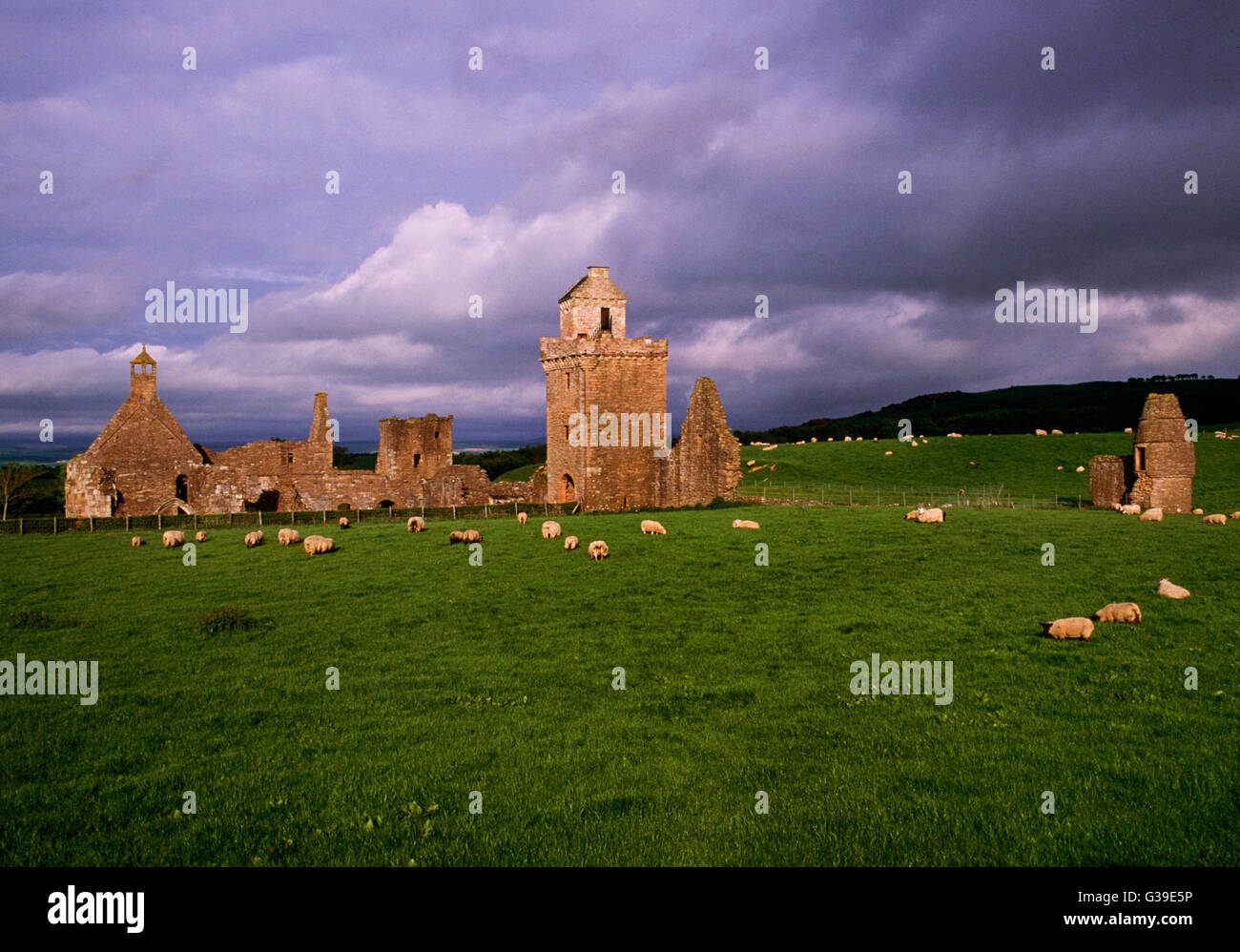 View ENE of Crossraguel Abbey, South Ayrshire, a Cluniac house originally founded in the early C13th by Duncan, - Stock Image