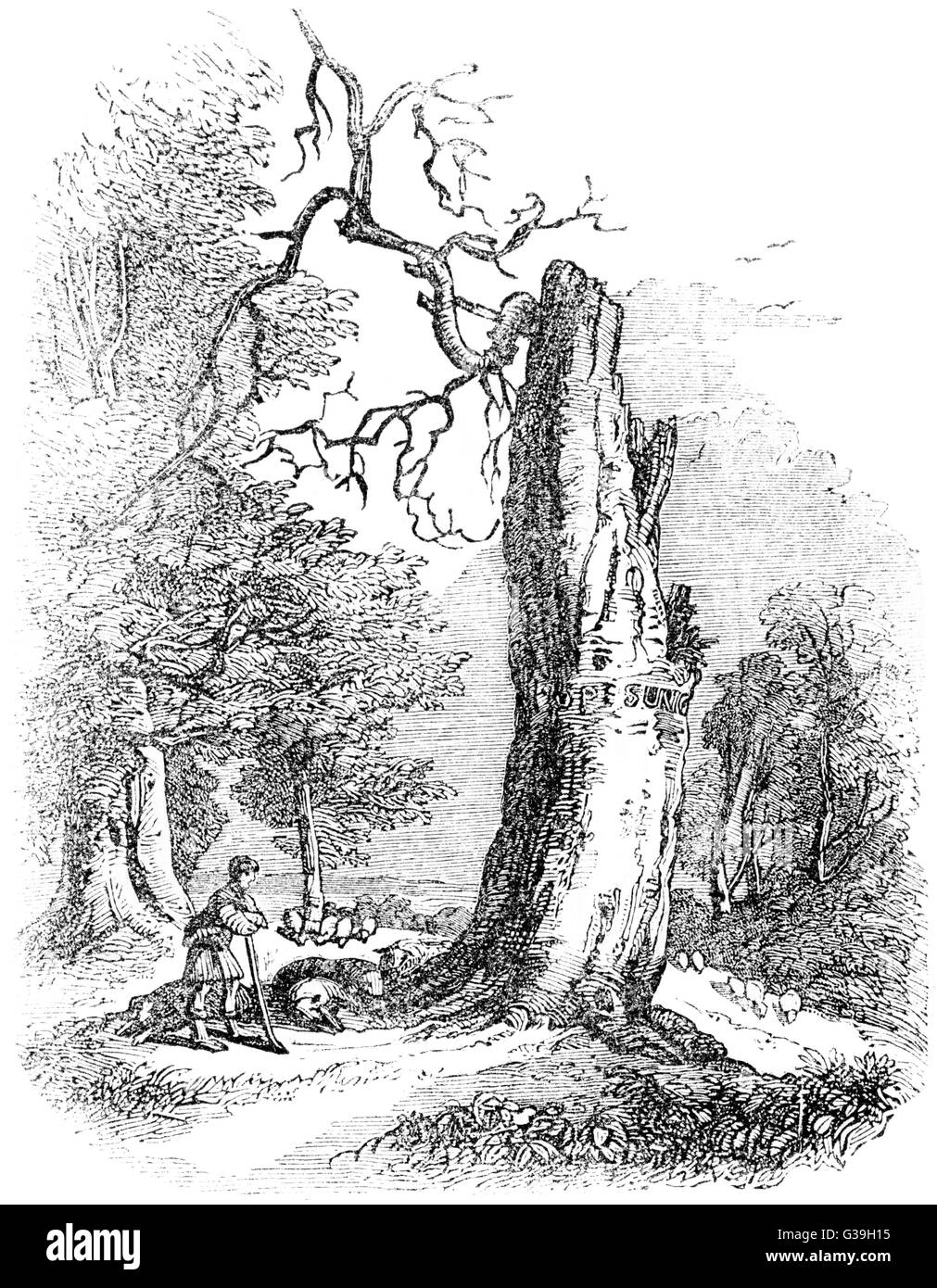 ALEXANDER POPE  Beech tree associated with the  English poet at Binfield, near  Windsor Forest, Berkshire      Date: - Stock Image