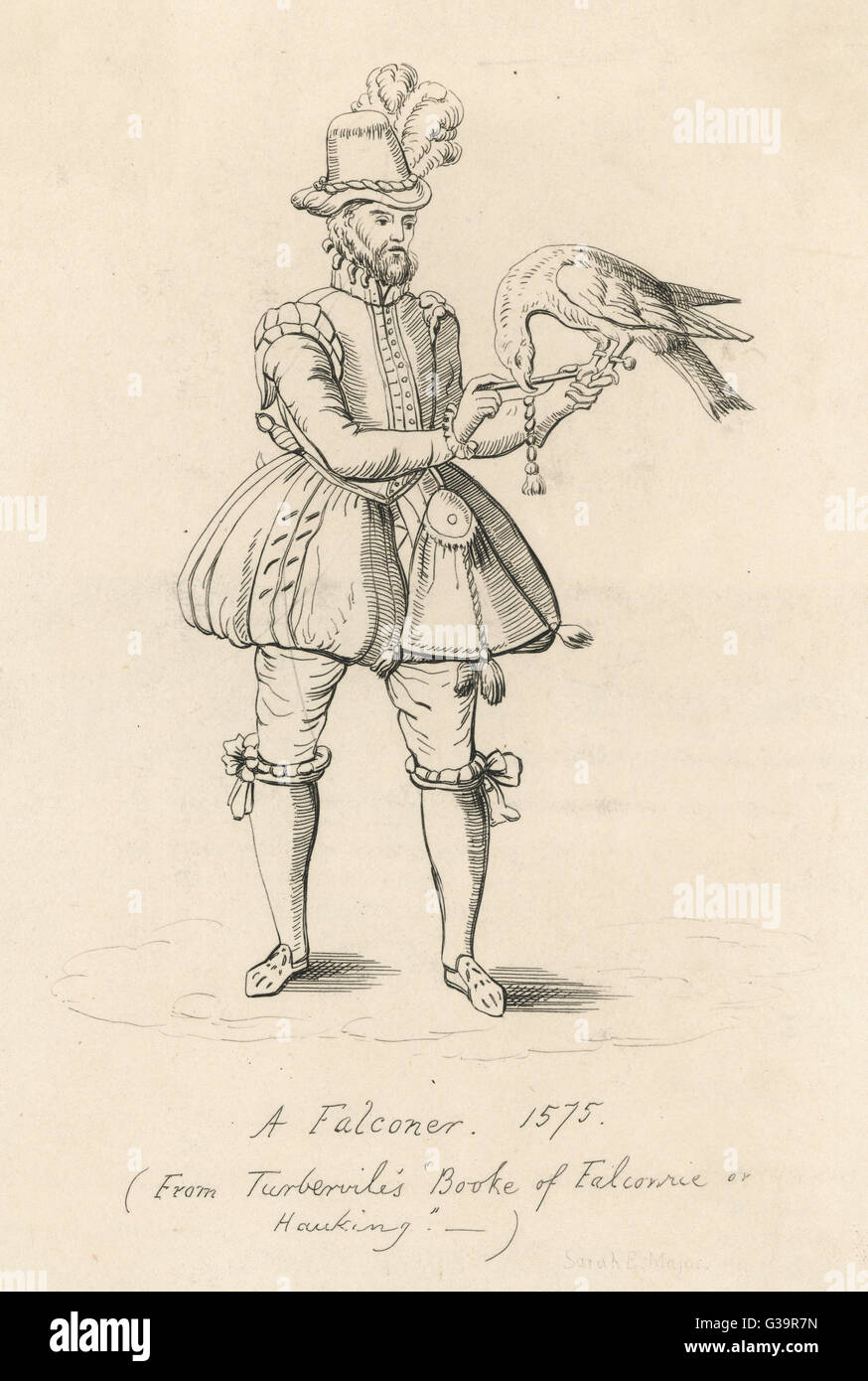An Elizabethan falconer with  his bird         Date: 1575 - Stock Image