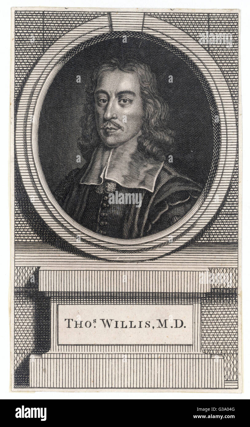 THOMAS WILLIS  English anatomist and physician       Date: 1621 - 1675 - Stock Image