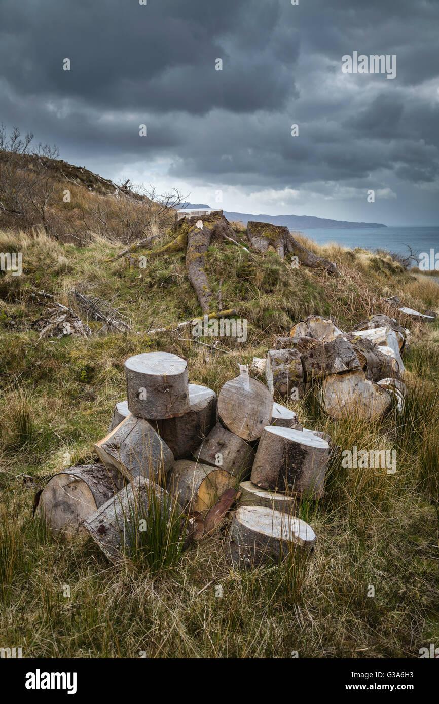 A pile of sawn off tree stumps, Sandaig, Western Highlands, Scotland - Stock Image