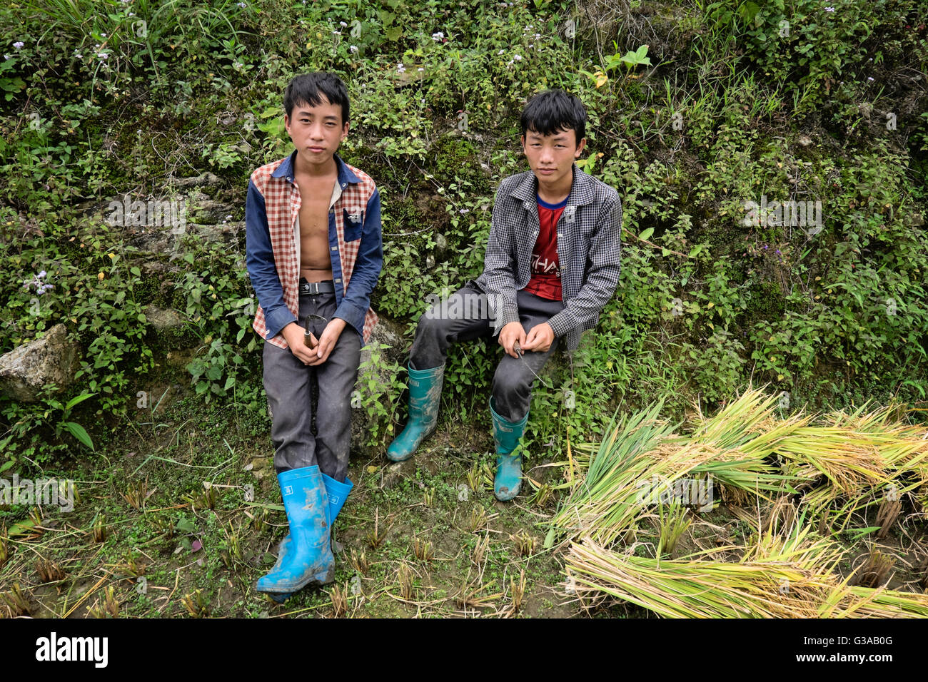 Young Hmong boys at the harvesting of rice in the village of Ta Phin, Sapa, Lao Cai  Province, Vietnam - Stock Image
