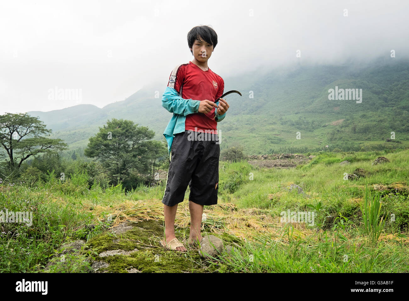 A young Hmong boy at the harvesting of rice in the village of Ta Phin, Sapa, Lao Cai Province, Vietnam - Stock Image