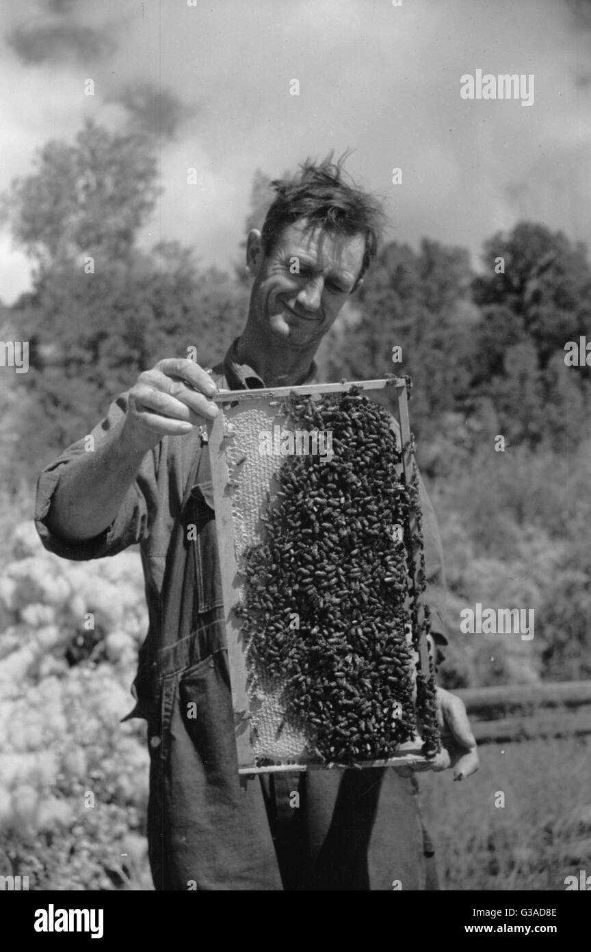 George Arnole exhibits a super of honey raised on his farm in Chaffee County, Colorado. Date 1939 Oct. - Stock Image