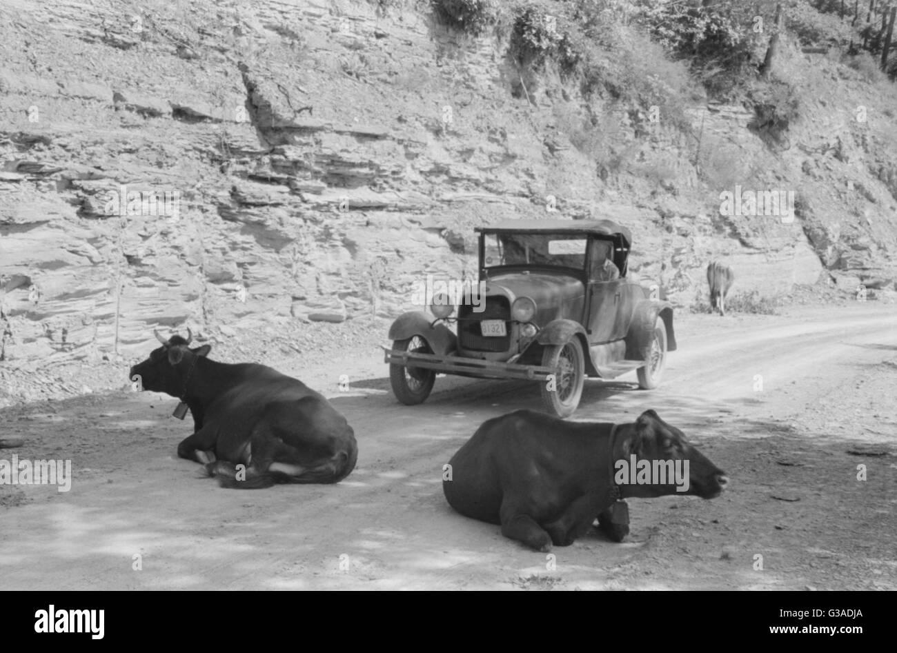 One of the hazards of driving over Kentucky mountain roads. Near Jackson, Breathitt County, Kentucky. Date 1940 - Stock Image