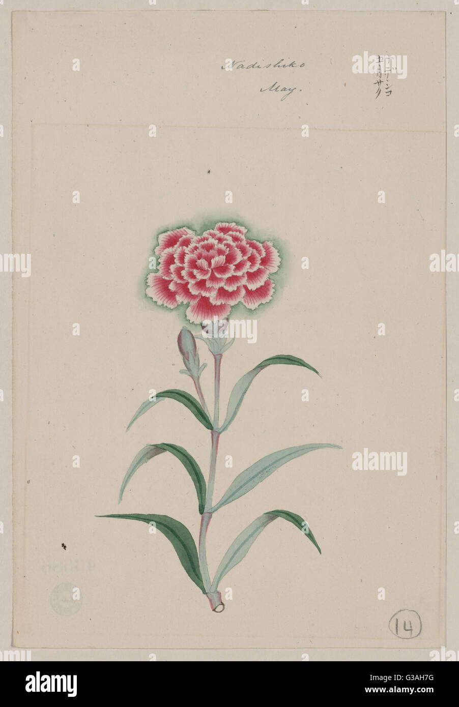Nadeshiko - May. Drawing shows the yamato nadeshiko flower, a pink and white blossom on stem with leaves. Date 187 - Stock Image