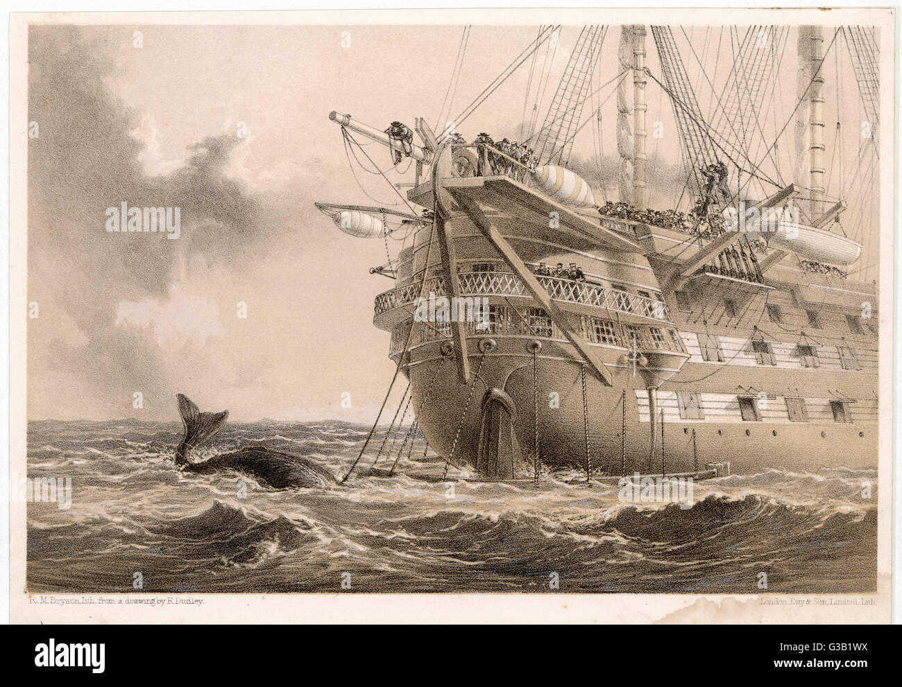The first, unsuccessful cable  is laid by HMS 'Agamemnon' : an inquisitive whale crosses  the line...   - Stock Image