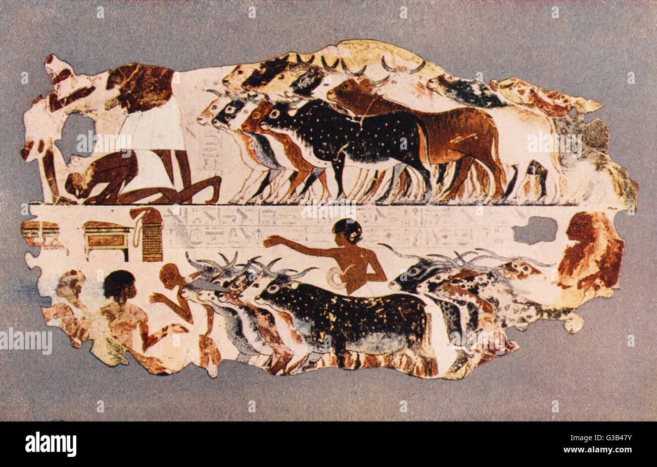 Farmers driving cattle          Date: circa 1500-1300 BC - Stock Image