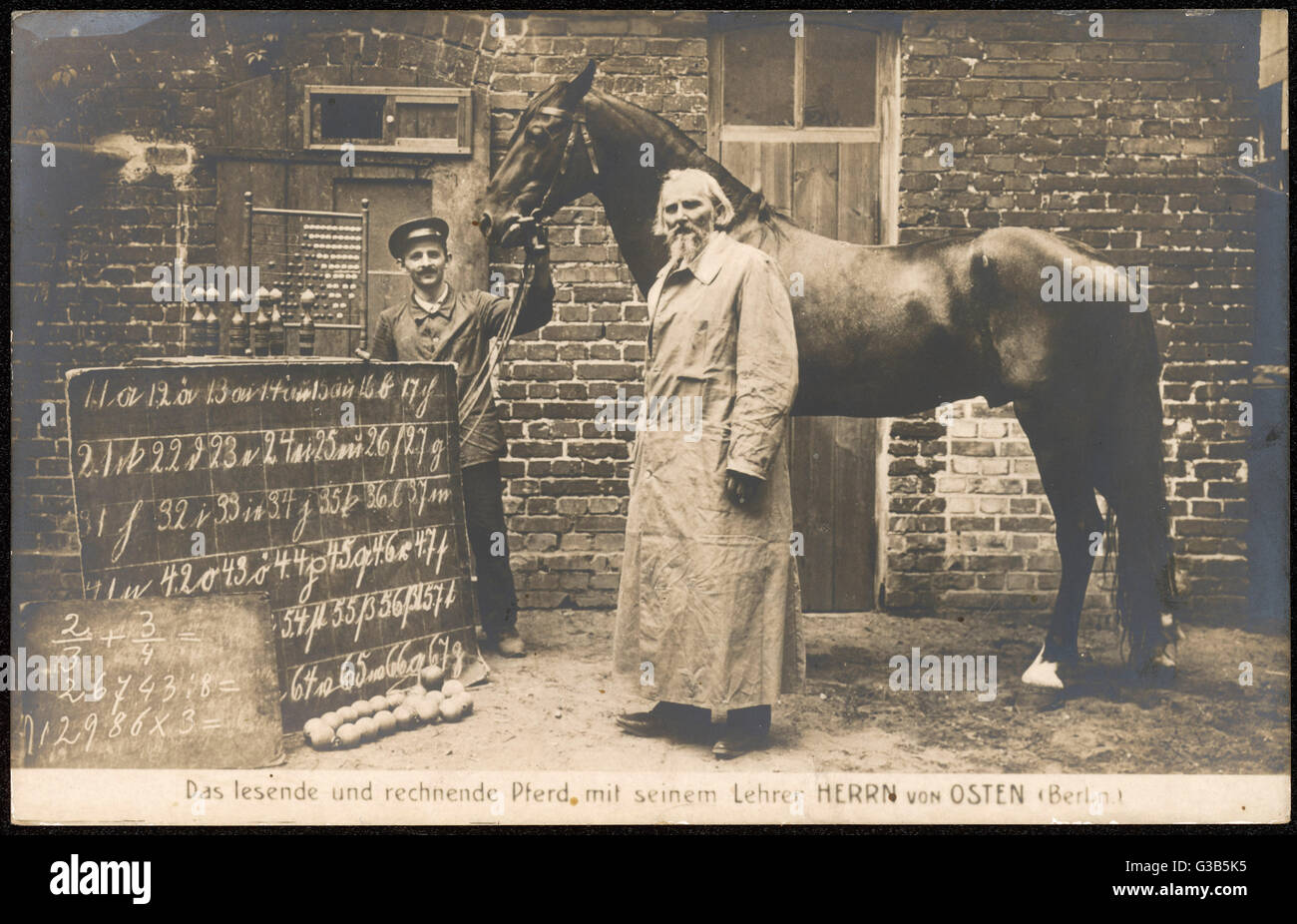 'Hans' a horse of singular  mathmatical skill, with his handler, and his tutor Wilhelm von Osten, who was - Stock Image