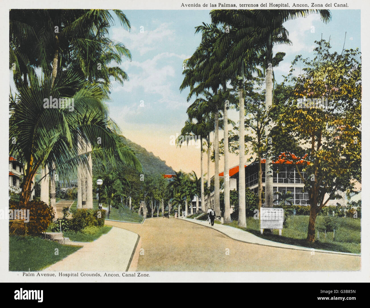 Ancon, Canal Zone:  Palm Avenue, Hospital Grounds        Date: circa 1915 - Stock Image