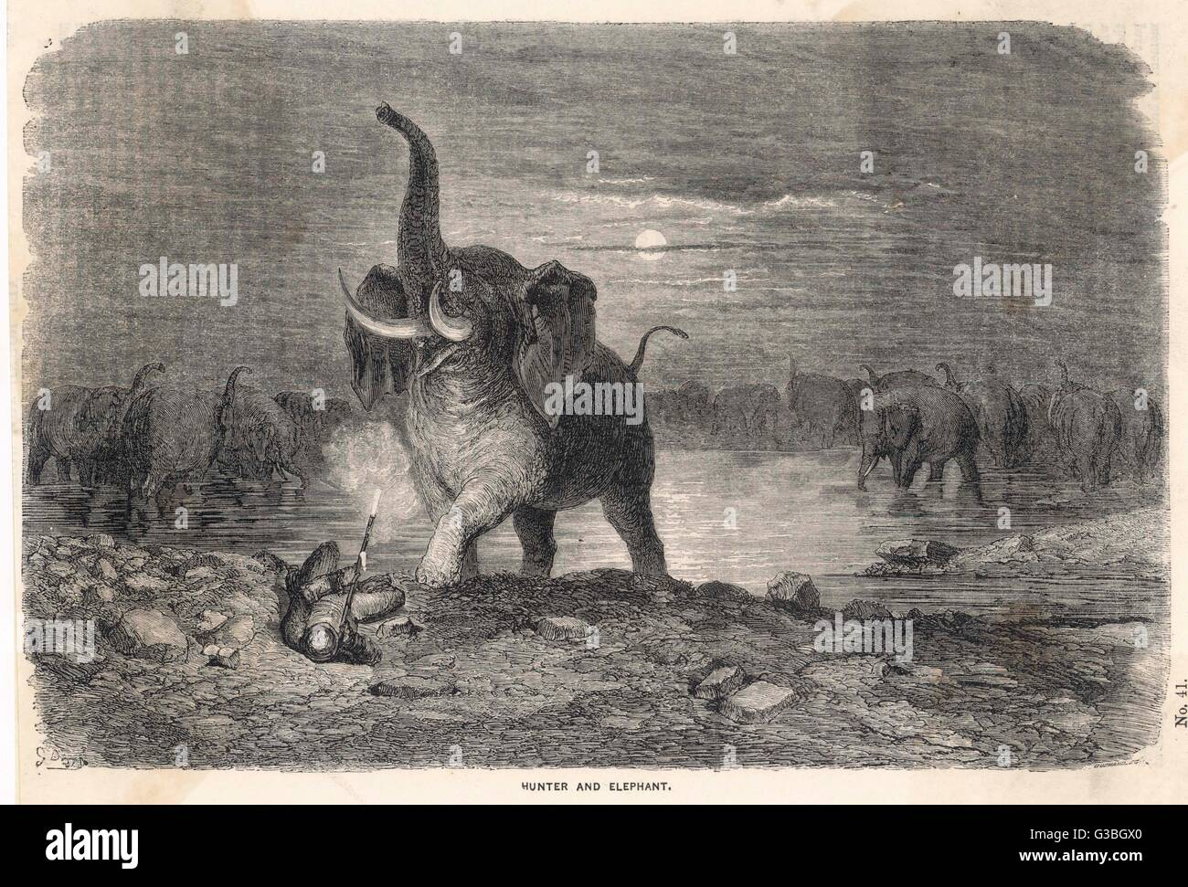 An intrepid hunter takes on an  entire herd of elephants and  fires at one of them from  point-blabk range.  In - Stock Image