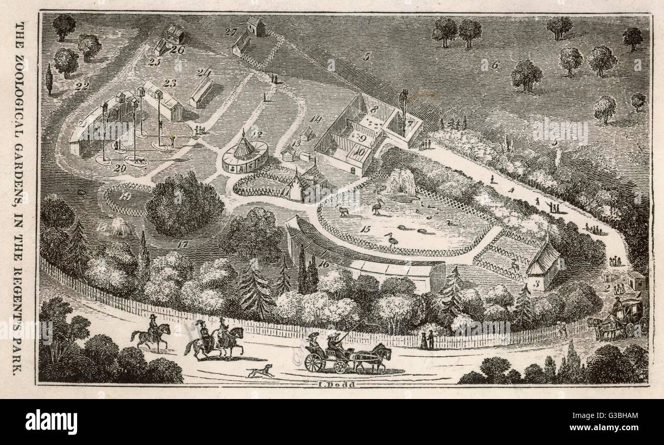Regent's Park, London : a  bird's eye view of the gardens  of the Zoological Society,  which were opened to Fellows Stock Photo