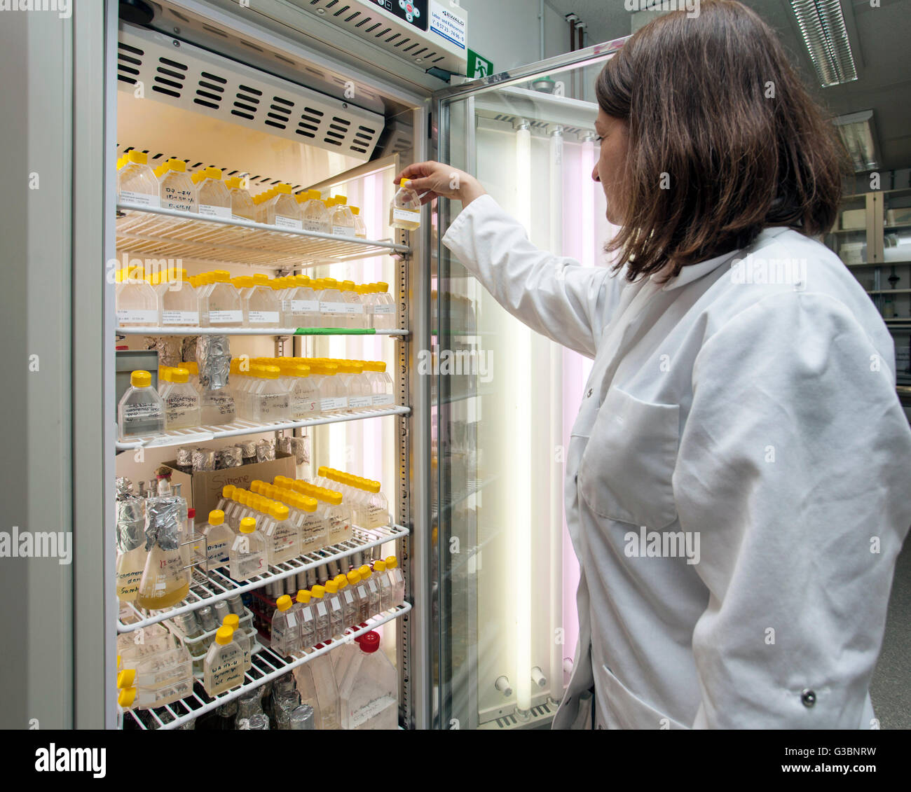 Scientist at a incubator in genetics laboratory - Stock Image