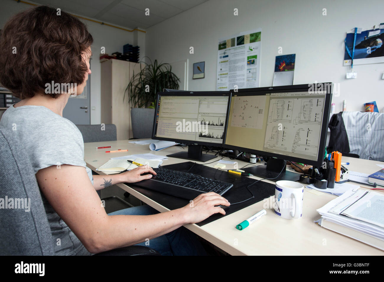 Scientist at the computer - Stock Image