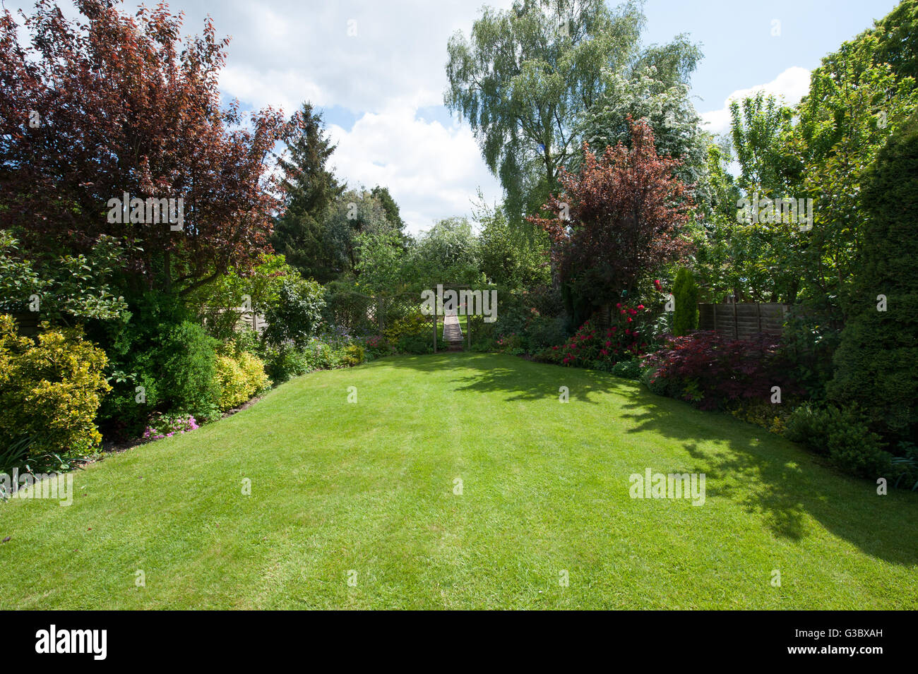 lawn and trees in rear garden - Stock Image