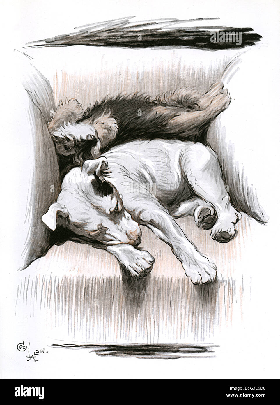 A bull terrier and a dachshund puppy sleeping in a chair -- Turps or Tirpz (short for Tirpitz or Turpentine) finds - Stock Image