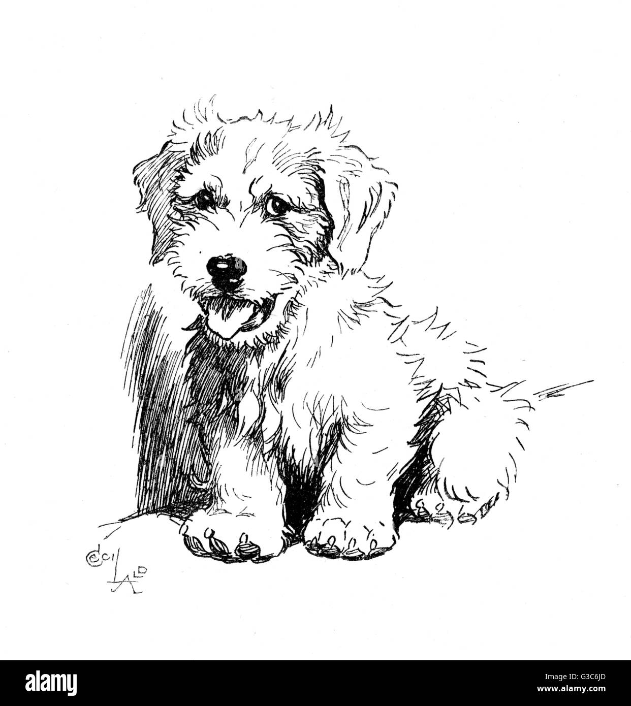 Illustration Of A Sealyham Terrier Called Bunch By Cecil Aldin Date 1932