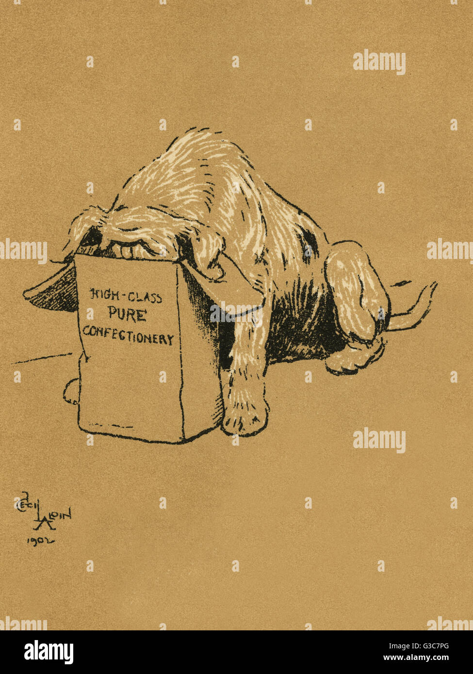 Illustration by Cecil Aldin, A Dog Day.  The dog goes into Miss Brown's room and finds a packet labelled High - Stock Image