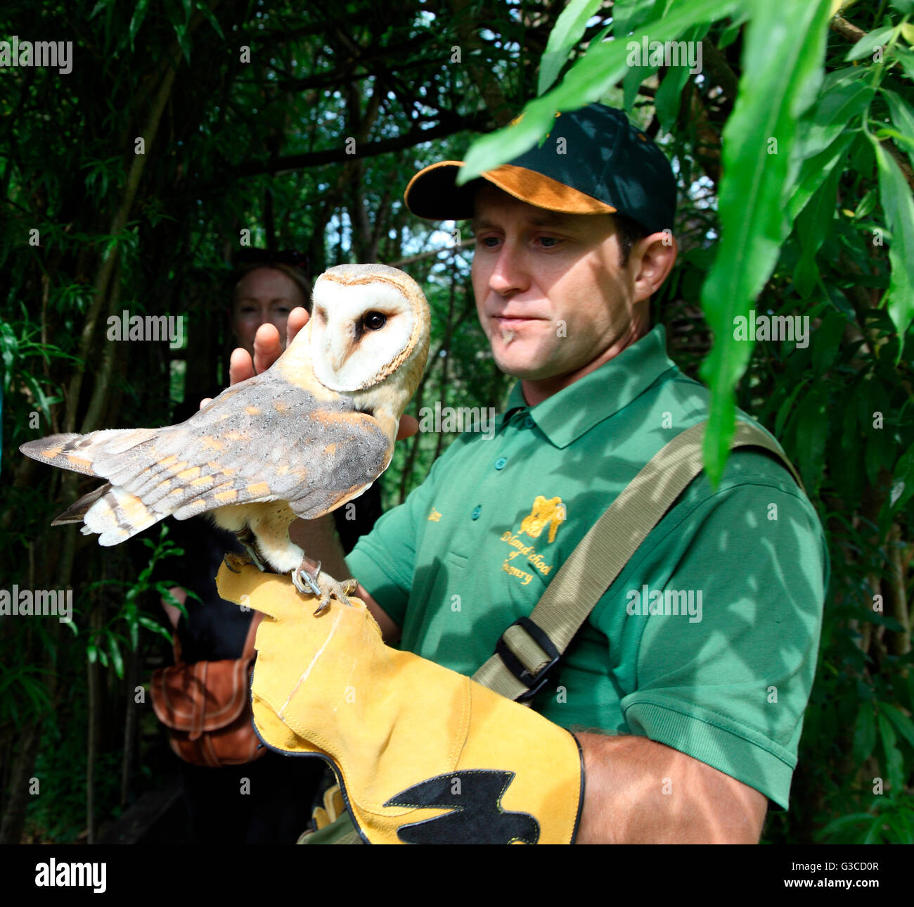 Pickles, owl at Dromoland School of Falconry with keeper Damien - Stock Image