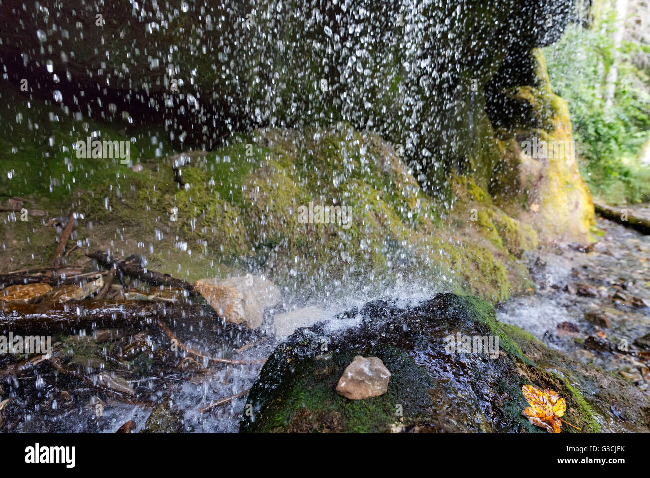 Germany, Baden-Württemberg, Black Forest, Wutach Gorge, drops of water and moss - Stock Image