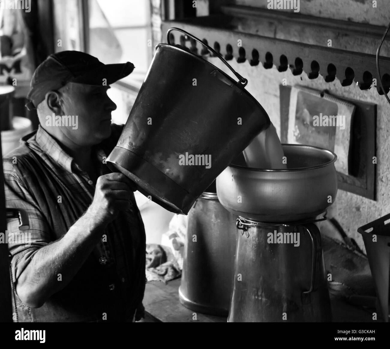 Milk production - Stock Image