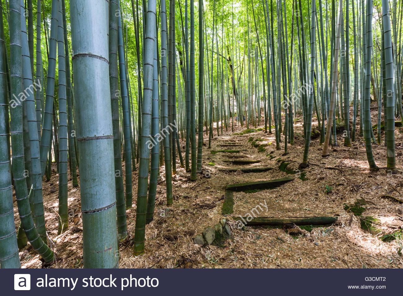 Old path through a bamboo forest, Adashino-Nembutsu-ji-Temple, Arashiyama, Kyoto, Kinki region, Kyoto prefecture, - Stock Image