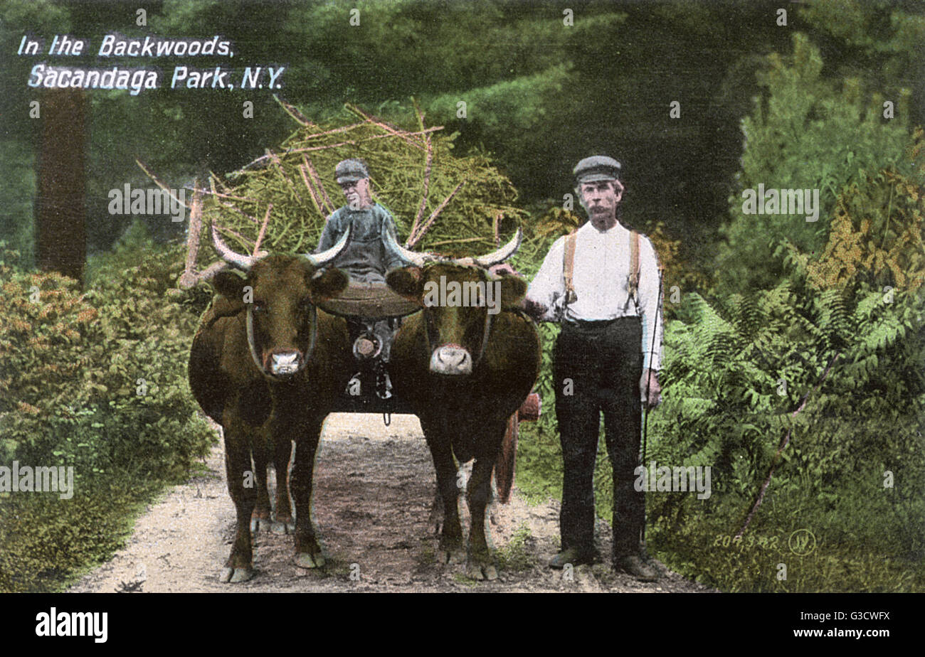 Locals with bullock cart in the 'Backwoods', Sacandaga Park, Northampton, New York State, USA.      Date: - Stock Image