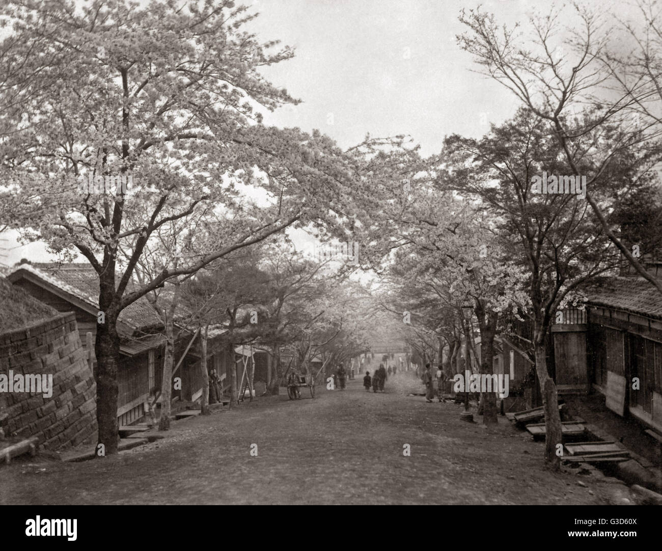 Cherry Blossom lining a sloping street, Japan, circa 1880s.     Date: circa 1880s - Stock Image