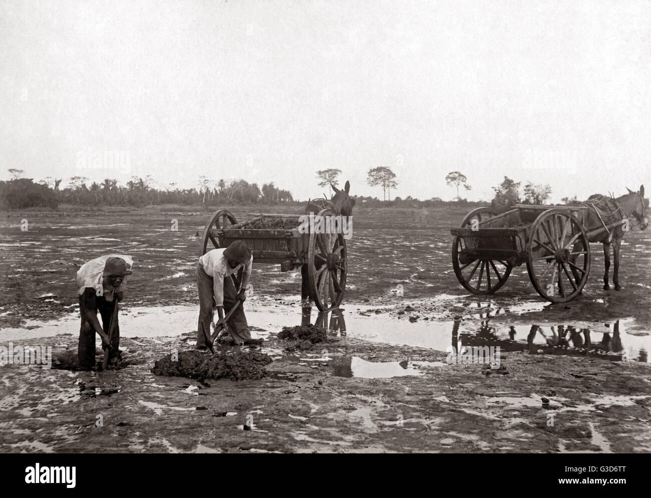 Digging pitch, La Brea, Trinidad, circa 1900.     Date: circa 1900 - Stock Image