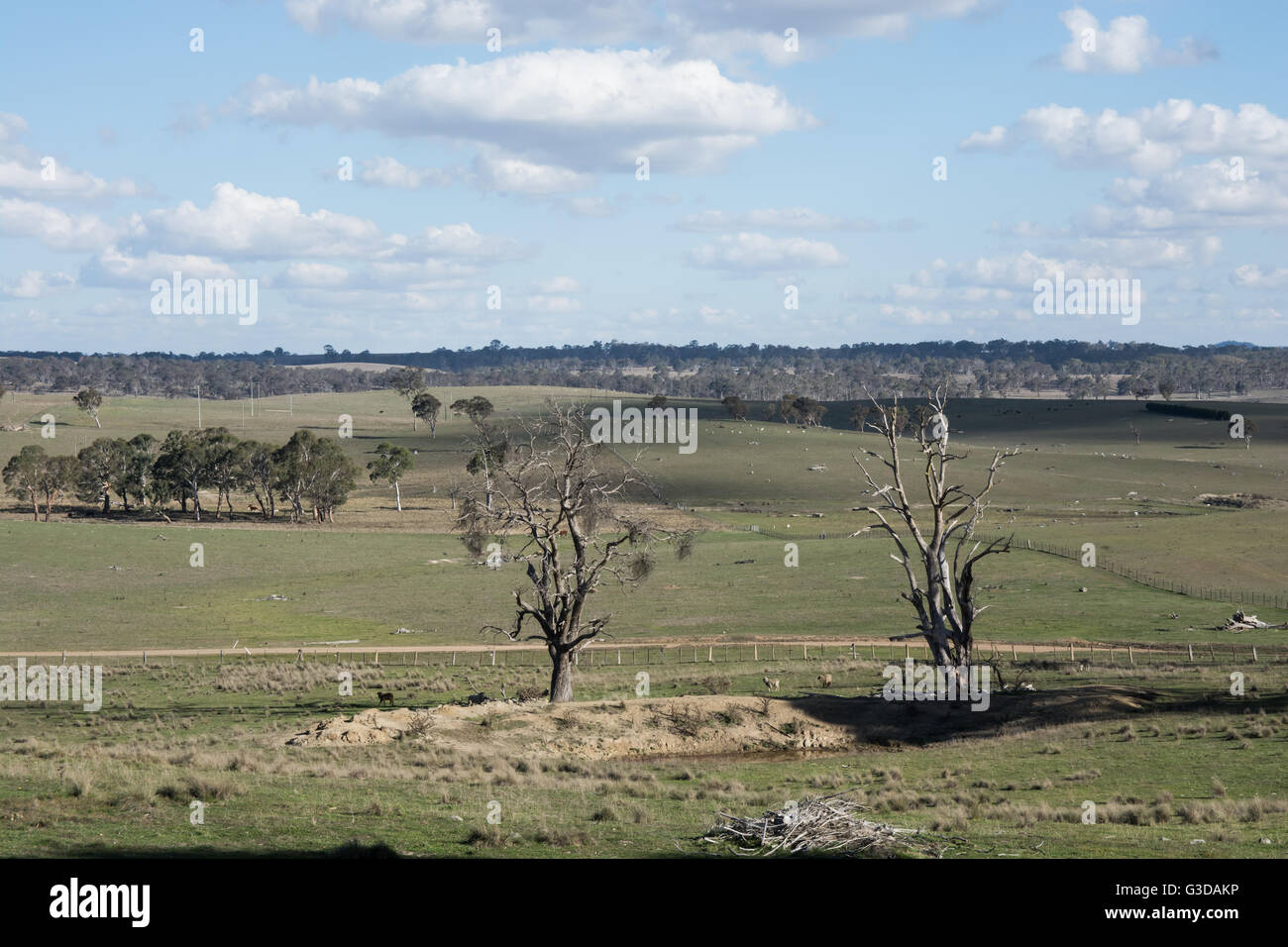 Hilltop View over pastoral scene of Sheep Country in NSW  Northern Tablelands. - Stock Image