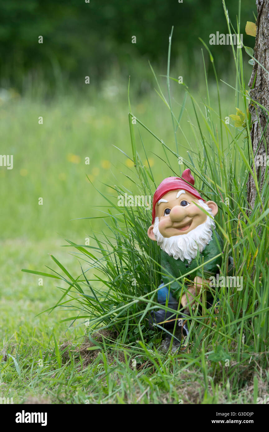 happy smiling garden gnome in long grass stock image - Gnome Garden
