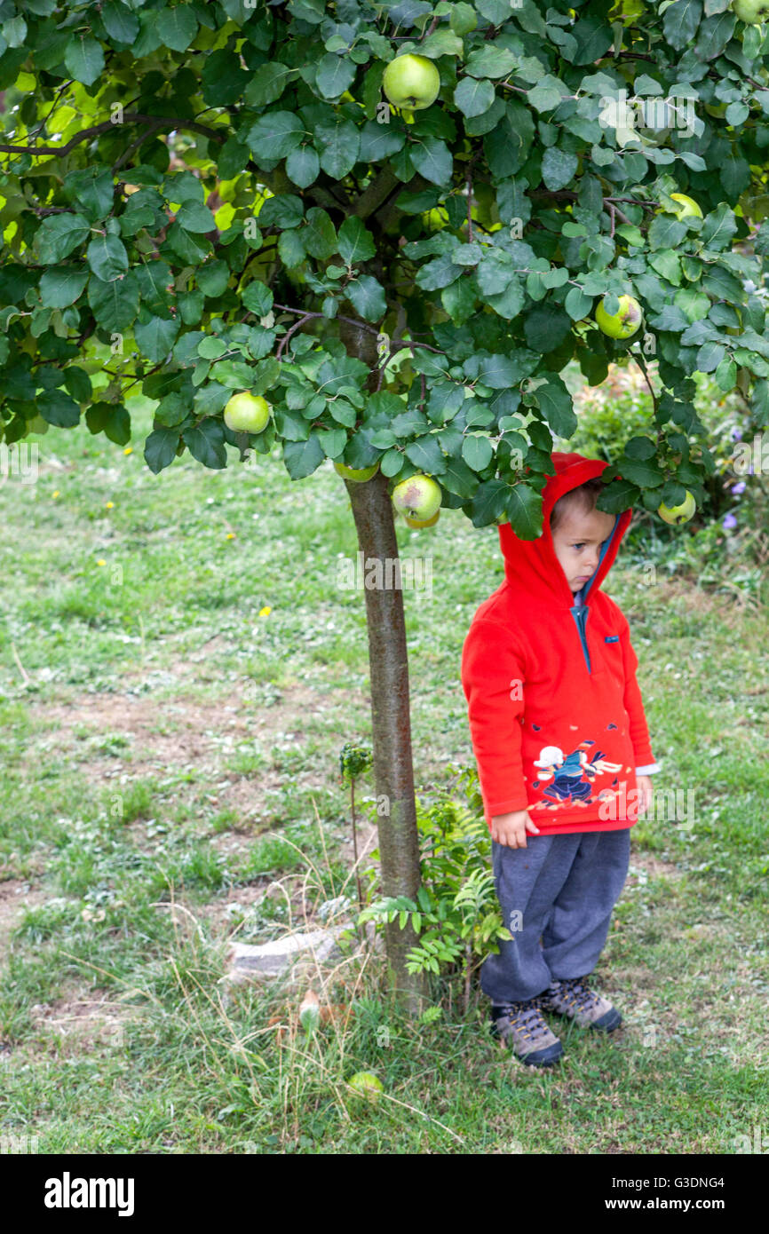 Sad child, little boy under the apple tree in the garden - Stock Image
